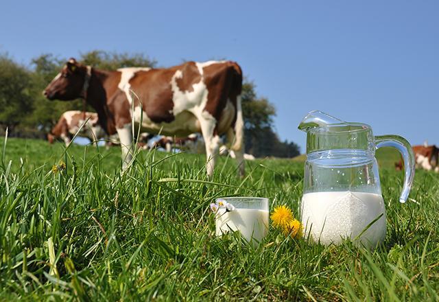 Loại sữa tươi tiệt trùng giá rẻ an toàn