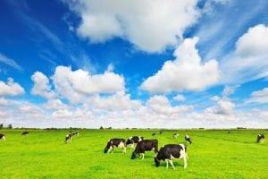 Loại sữa tươi không đường nhập khẩu giá cả phải chăng